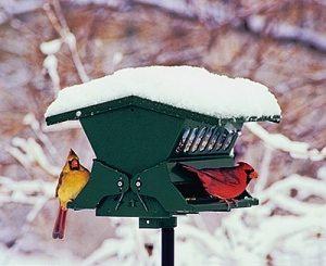 Absolute-II-bird-feeder.jpg