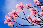 Living Arts Weekly:  Blooming