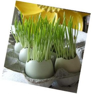 Living Arts Weekly:  Seedling
