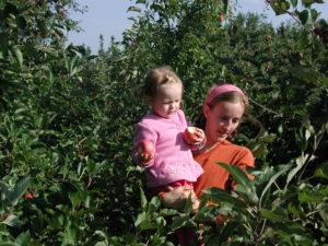 Living Arts Weekly: Apples